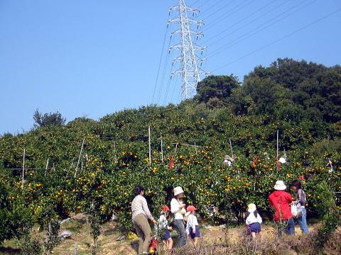みかん&レモン農家のブログ