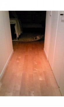 飼育放棄犬シーズー春香が教えてくれた、幸せな気持ちになる方法-SH3502170001.jpg