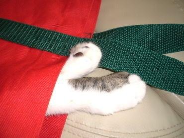 くぅちゃんだって猫である。-赤いバッグ1