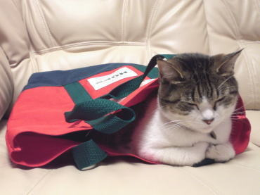 $くぅちゃんだって猫である。-赤いバッグ3