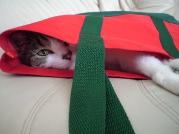 $くぅちゃんだって猫である。-赤いバッグ2