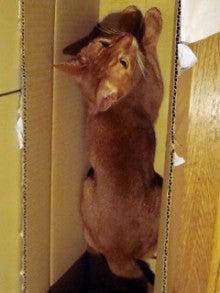 たかが猫 されど猫-アンジ君、三軒茶屋ね