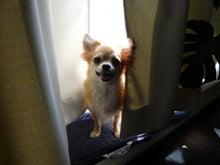 イヌとスローライフ-カーテンからくるみ