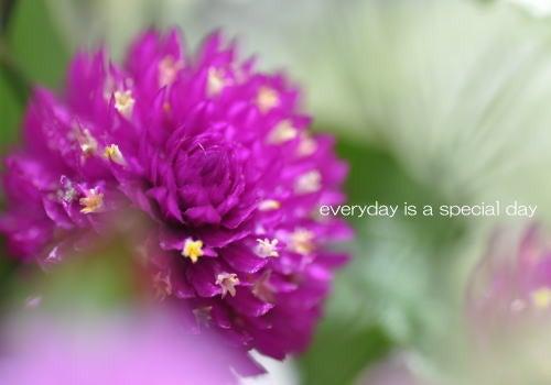 毎日がスペシャル♪-花