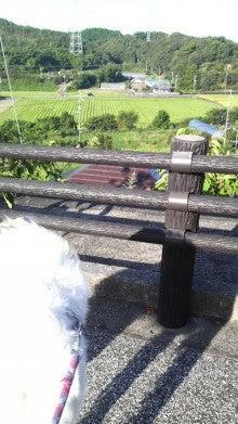 BORZOI & MY LIFE -YAMABLO-        IN KOCHI-P1000036.jpg