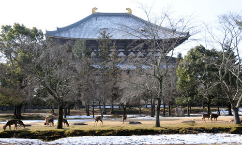 三笠観光会館のブログ-東大寺裏
