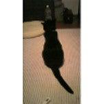 ドックカフェで働く猫PUREとチワワHEART-080830_000442_ed.jpg