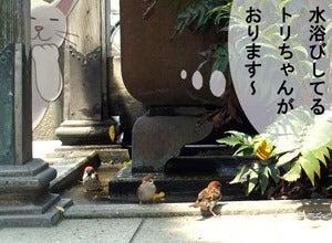 【漫画】ねこ並み☆気ままに気分転換-正池院4