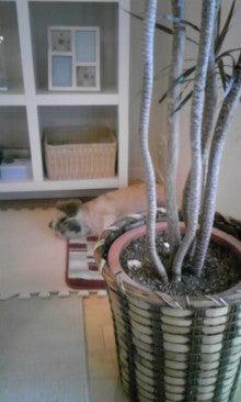 飼育放棄犬シーズー春香が教えてくれた、幸せな気持ちになる方法-090921_1654~01.jpg