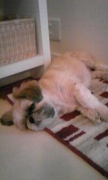 飼育放棄犬シーズー春香が教えてくれた、幸せな気持ちになる方法-090921_1654~02.jpg