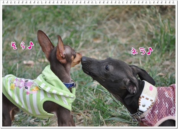 Hearty&Resty♪...feat.Nera♪ ~心優しい犬の癒し♪~ from 滋賀びわ湖
