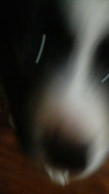 BORZOI & MY LIFE -YAMABLO-        IN KOCHI-P1000070.jpg
