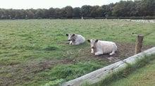 那須日記ブログ編-デンマークの牛