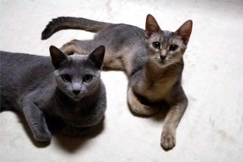 すみれ色の猫たち-hanasora3