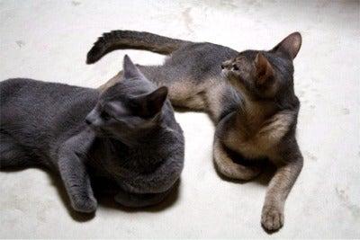 すみれ色の猫たち-hanasora2