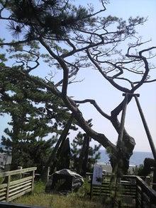 日々 更に駆け引き-羽衣の木