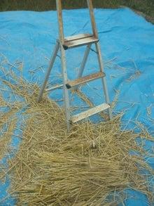 創作団だいだらぼっちの越境型もののけ思考とその動向。-小麦脱穀