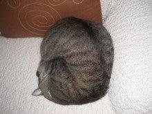 Cat-Megu-ニャンモナイト縦