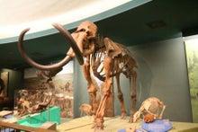 世界一周★タイムズ-0220国立自然史博物館