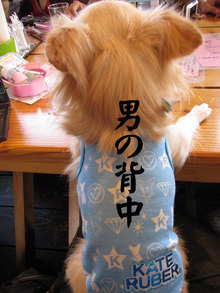 ayu♀&チワワのリキ♂-2009.09.23
