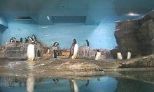 $死せる孔明、生ける仲達を走らす-ペンギン!