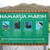 Hamakua Marshの画像