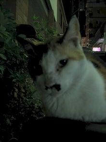 一人と4匹の猫-チャプちゃん
