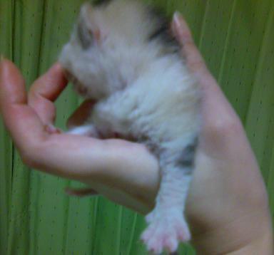 続♪瑠璃のRS徒然日記-子猫が小さいの!