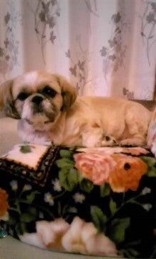 飼育放棄犬シーズー春香が教えてくれた、幸せな気持ちになる方法-091012_2135~01.jpg