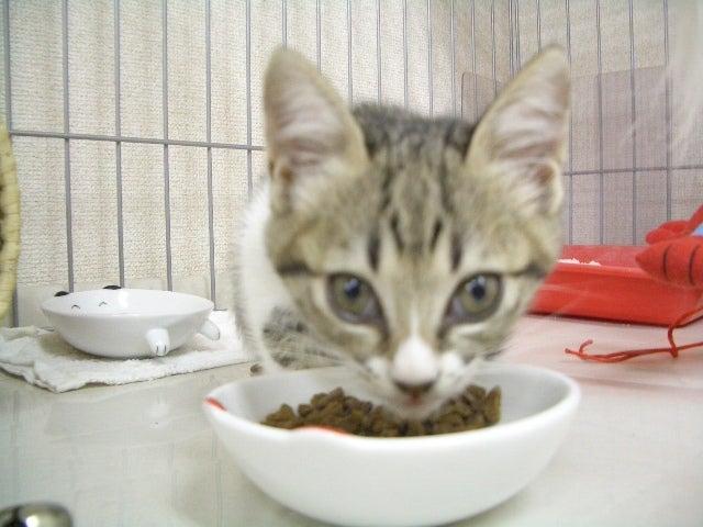 いっぱい食べて大きくなってね | 猫カフェ 浅草ねこ園ブログ ...