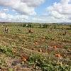 Aloun Farmsの画像