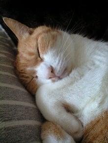 ずれずれブログ…湘南で猫と暮らせば…-091019_1431~0001.jpg