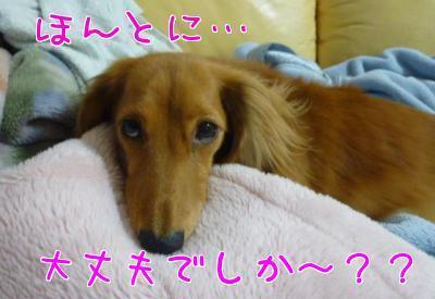 あみーごのブログ