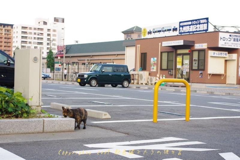 駅長猫コトラの独り言~旧 片上鉄道 吉ヶ原駅勤務~-事務所の周りにはにゃんこが