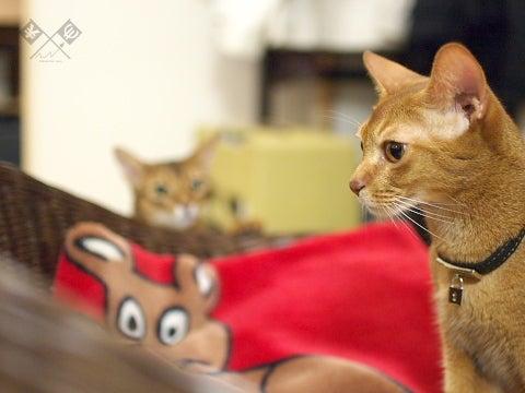 ユーロ-エン 為猫相場展望