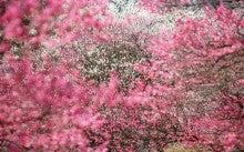 $Beauty from Beauty :,。☆゚・:,。゚・:,。★゚・