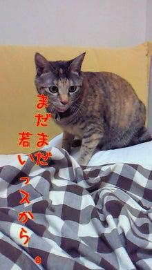 """""""菊""""と""""わかめ""""の姉妹日記 border="""