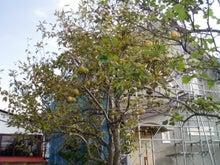 $音更町在住 建築士であり社長の 中谷彰 が仕事、生活を通じて感じたことを書いていきます。-nasi