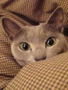 たかが猫 されど猫-フジ子ちゃん、冬が始まったろ?