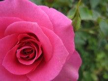 尋常ならぬ娘のオタクな映画日記-rose