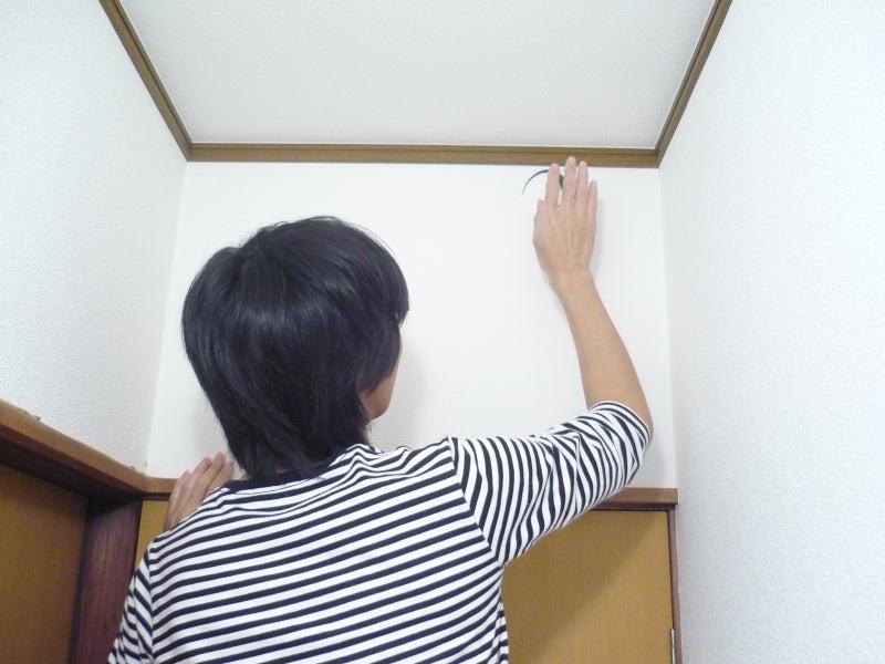 $Lacerta Room Blog-ダルマチア脱走