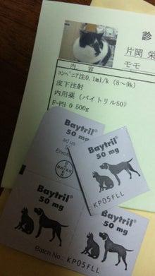 但馬の小京都 出石  手打ち皿蕎麦『入佐屋』の瓦版-091029_165020.jpg