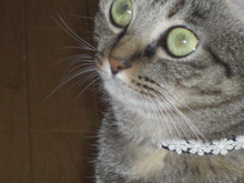 Cat-Megu-激写2!