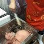 食肉加工体験研修