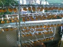 干柿酒井のブログ