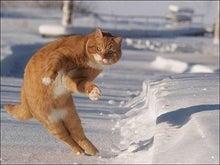 はぐれ獣医 純情派~異論!ワン論!Objection!~-F-cat