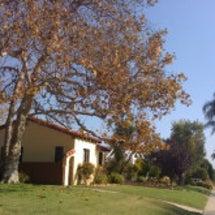ロサンゼルスも秋