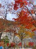円居ママのブログ-あぶくま洞紅葉