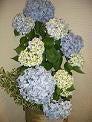 円居ママのブログ-紫陽花