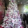 銀座クリスマス★